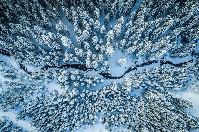 Drohnenaufnahme vom winterlichen Zauchensee, Naturfotograf Zauchensee, beschneite Bäume